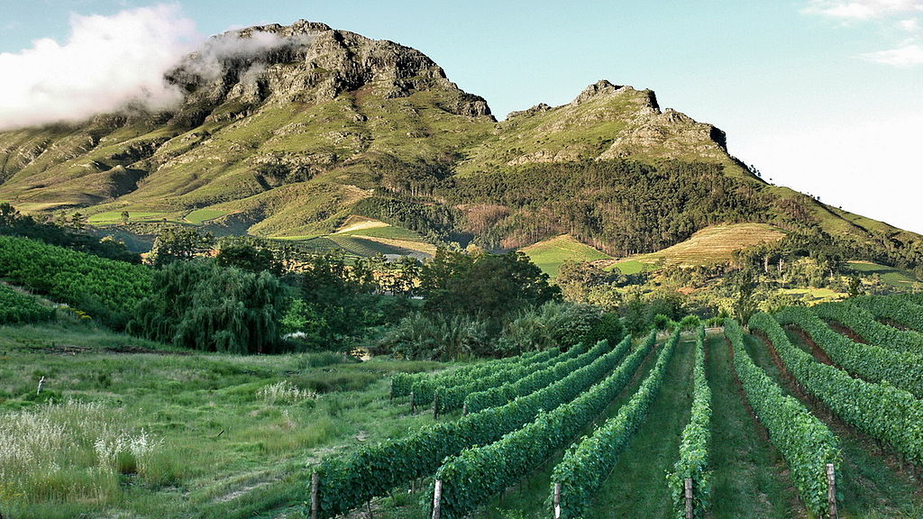 1024px-Stellenbosch_vineyards