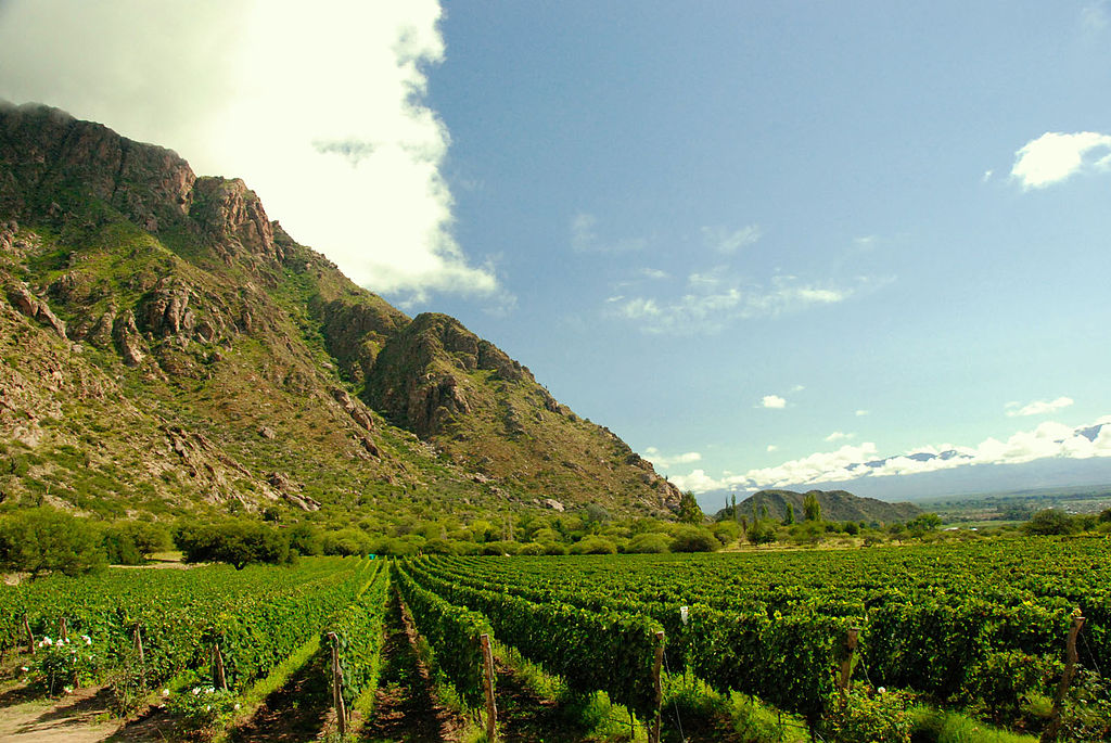 1024px-Vineyards_near_mountains