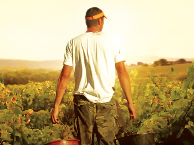 Documentaire Vendanges