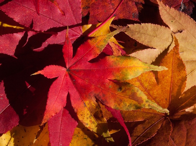 autumn-200293_960_720