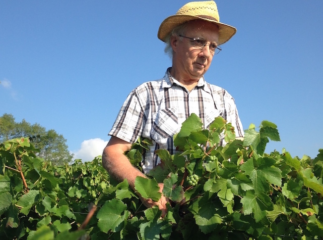 vignes blanches