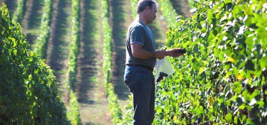 regisseur_exploitation_viticole