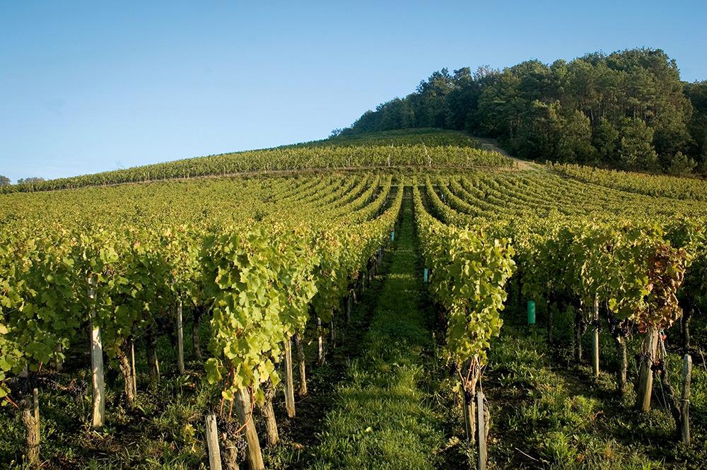 Vignobles Franck Despagne 2